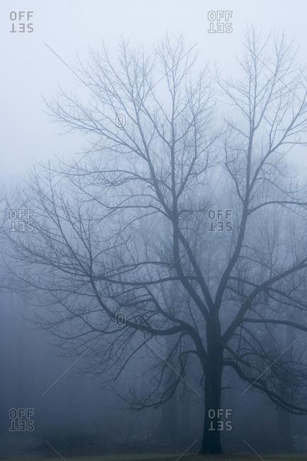 Skeleton tree in fog