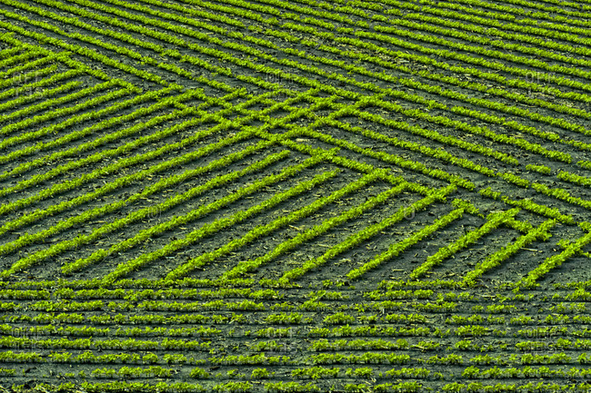 Field patterns formed by crops