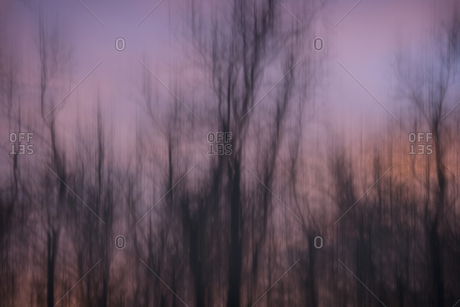 Artistic abstract of trees at sunset above the Upper Mississippi