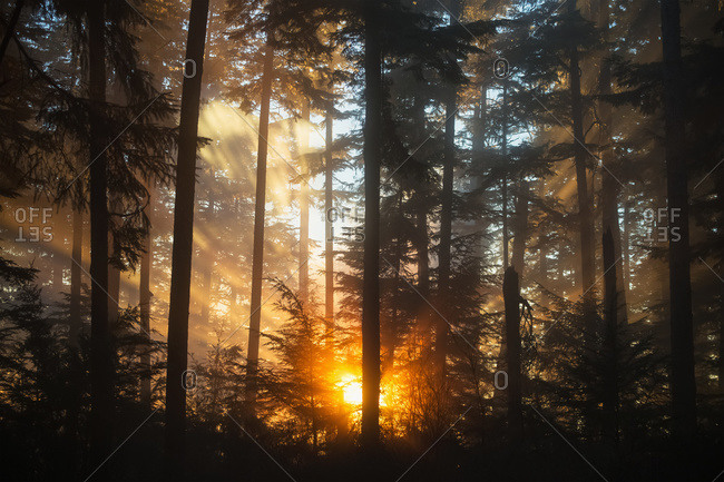 As the setting sun breaks through the fog, a starburst of color brightens the forest, Tongass National Forest, Juneau, Alaska, United States of America