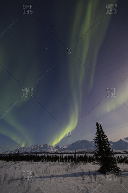 View of the Aurora Borealis (Northern Lights) dancing above the Alaska Range along the Parks Highway at Broad Pass, Alaska, United States of America