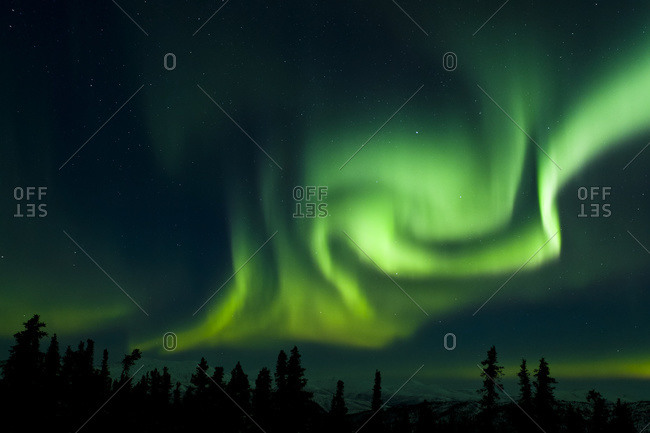 The bright neon green aurora swirling above the boreal forest, Chena River State Recreation Area, Fairbanks, Alaska, United States of America