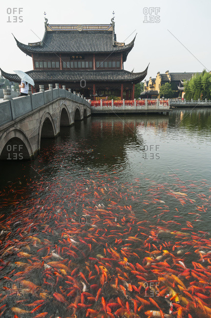 Zhouzhuang ancient town, beautiful traditional Chinese architecture, with koi fish in water, Zhouzhuang, Shanghai, China
