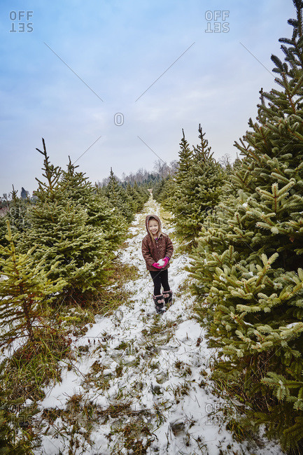 Young girl walking through a Christmas tree farm holding a snowball, Stoney Creek, Ontario, Canada