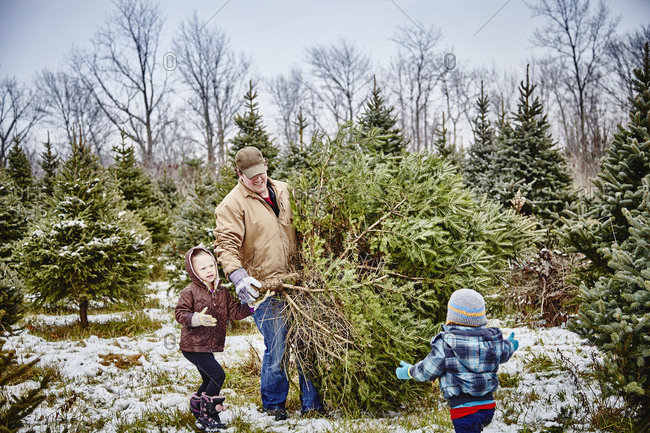 Father and daughter carrying cut down Christmas tree from a Christmas tree farm, Stoney Creek, Ontario, Canada