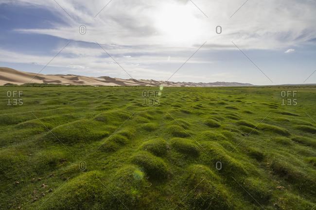 Seruun Bulag oasis by the sand dunes of Khongoryn Els, Gobi Gurvansaikhan National Park, Mongolia