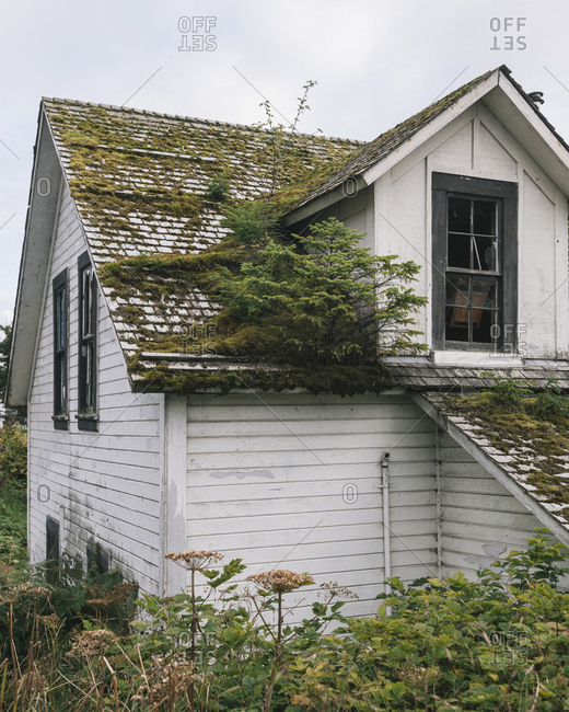 Roof covered with plant life and moss in Sitka, Alaska