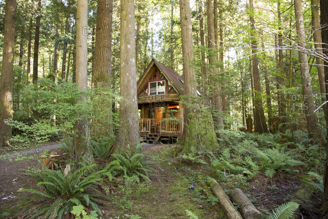 Small vacation rental cabin in the woods