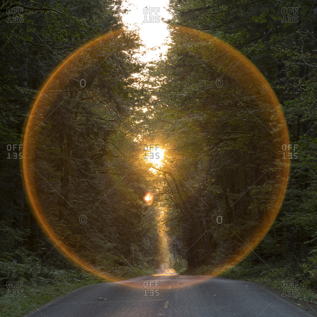 Lens flare ring around the sun over a road through the woods