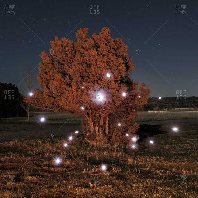 Lights surround a bush in field under night sky in Montana
