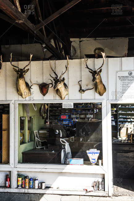 January 13, 2015: Deer head trophies on the wall of an auto mechanic shop