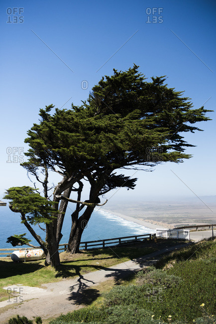 Windblown tree at the lighthouse, Point Reyes National Seashore