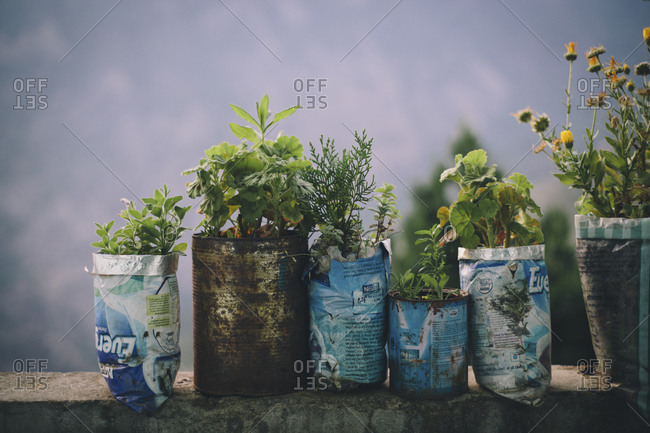 A series of potted plants and flowers sit in repurposed cans in Langtang, Nepal