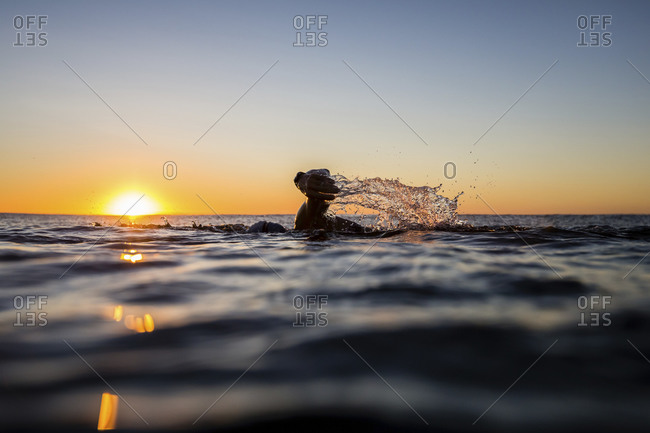 Woman swimming in the ocean at dawn at Sunrise Beach, Queensland, Australia