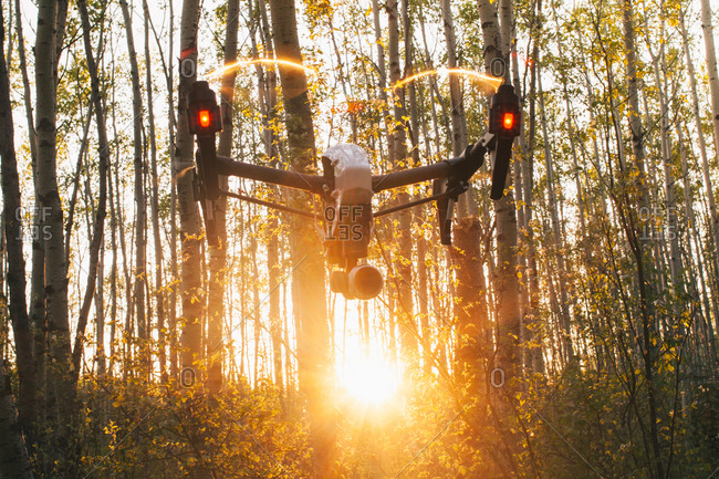 A drone flying in the forest in Alberta, Canada