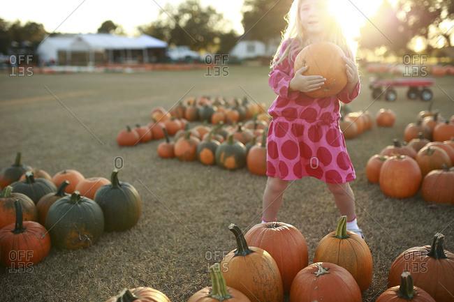 Little girl holding a pumpkin at a pumpkin patch