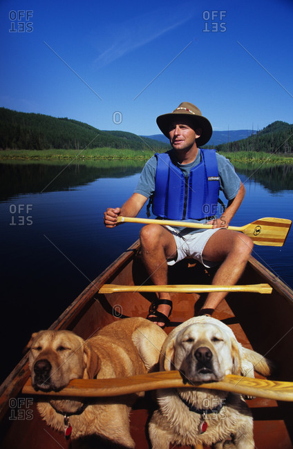 Man canoeing with two yellow labs