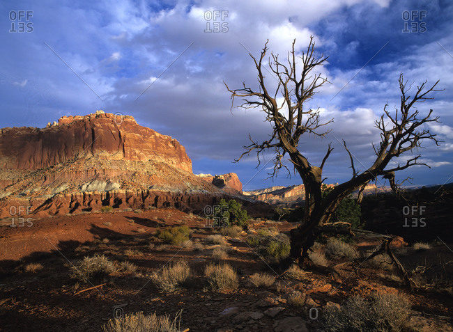 Tree and butte in Capitol Reef National Park, Utah