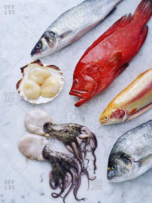 Fresh red grouper, dorado, sea bass, octopus, golden rainbow trout and scallops