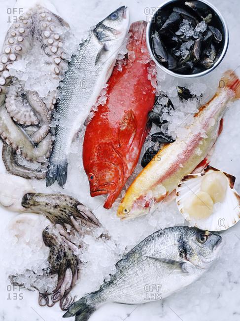Fresh dorado, sea bass, octopus, red grouper, golden rainbow trout, mussels and scallops