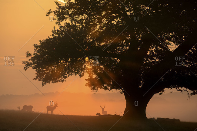 Deer under tree silhouetted at dusk