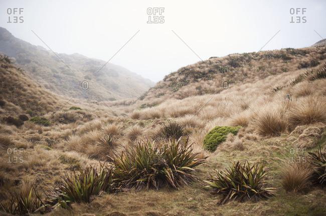 Landscape of mountain scrubland, Nelson Lakes, New Zealand
