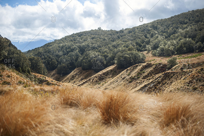 Shrubland and forest in mountains, Nelson Lakes, New Zealand