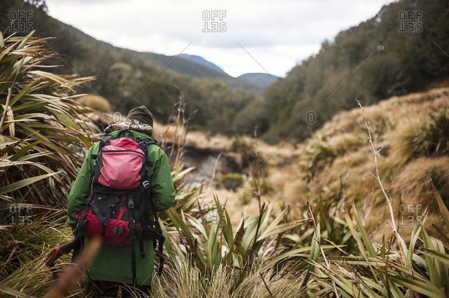 Hunter walking through scrubland, Nelson Lakes, New Zealand