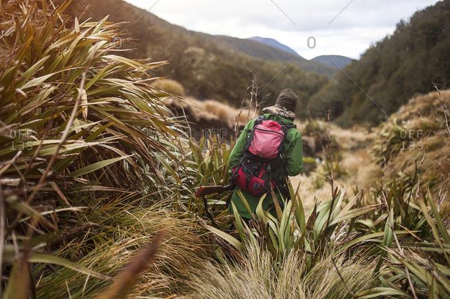 Hunter walking in scrubland, Nelson Lakes, New Zealand