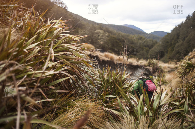Hunter in scrubland in mountains, Nelson Lakes, New Zealand