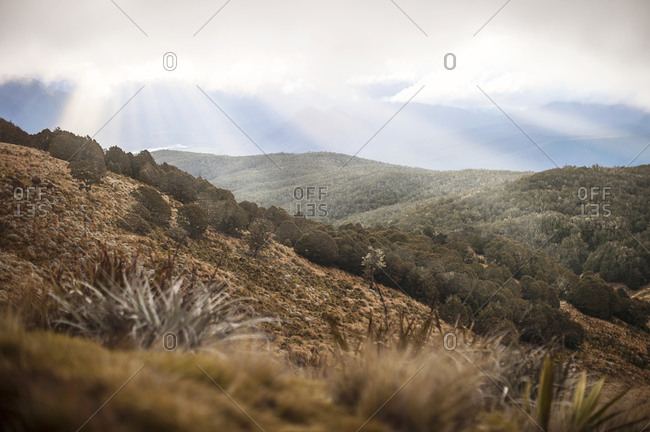 Forest and shrublands, Nelson Lakes, New Zealand