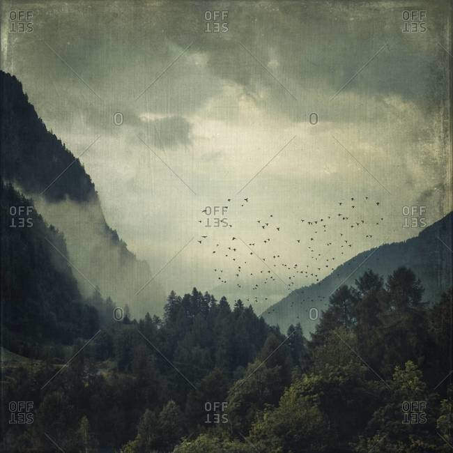 View to valley and forest in morning mist, flock of birds