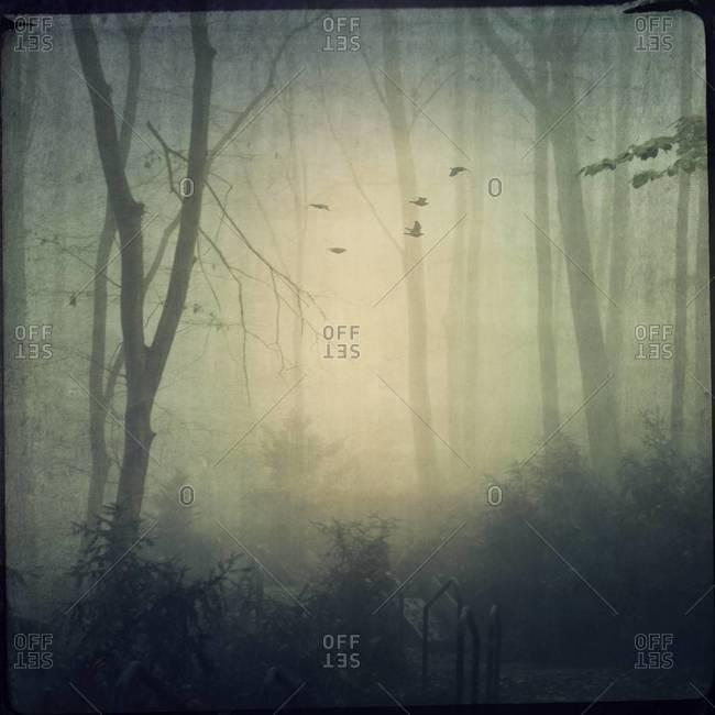 Forest in mist, flying birds