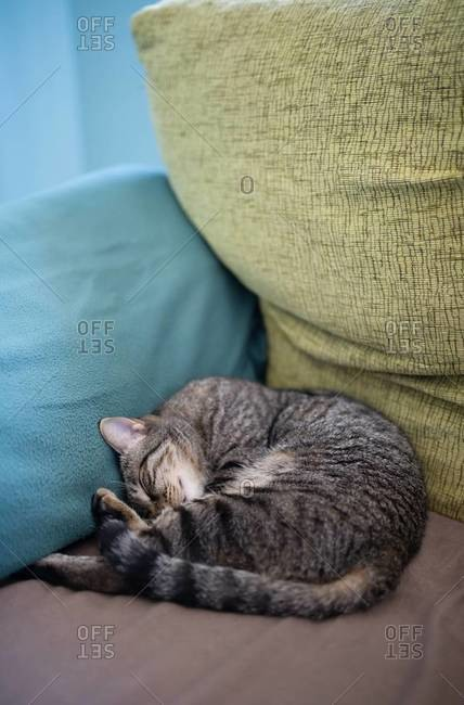 Tabby cat sleeping in the corner of a couch at home