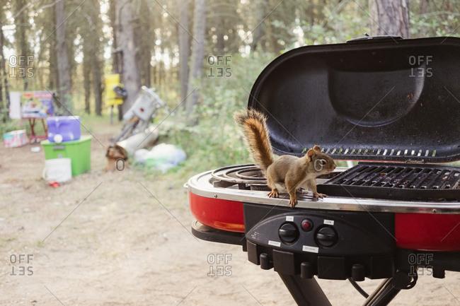 Squirrel investigates a campsite grill