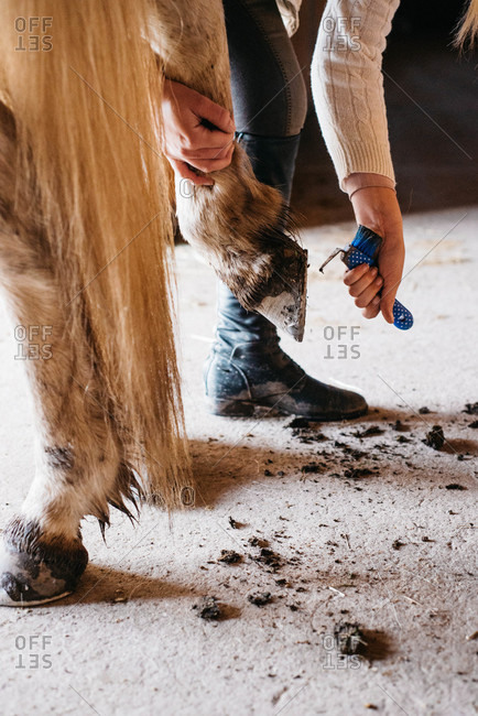 Woman cleaning mud off a horse's hoof