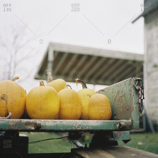 Pumpkins on a rustic metal trailer