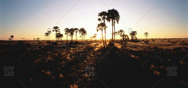 Grasslands at Sunset Near Okavango, Botswana