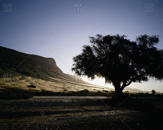 Silhouette of Tree at Sunset, Damaraland, Namibia