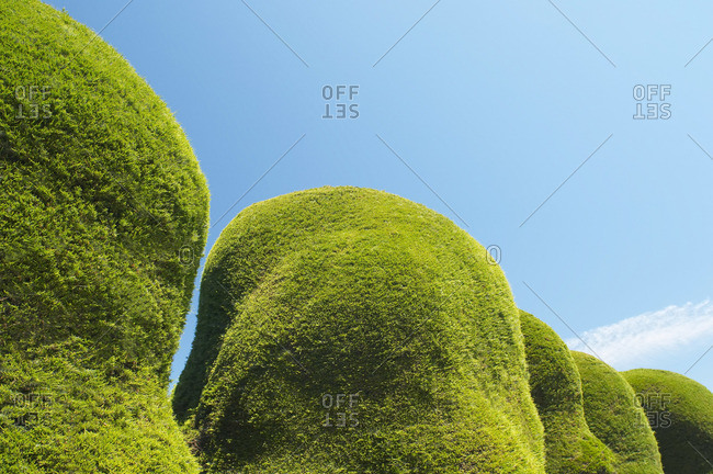 Sculpted Hedges and Blue Sky