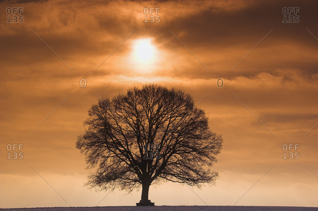 Sunrise and Oak Tree