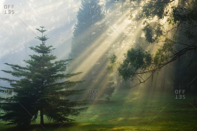 Sunrays Through Morning Fog, Dandenong Ranges, Victoria, Australia