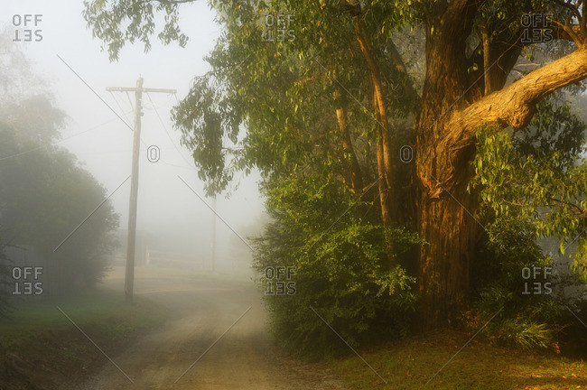 Country Road, Yarra Valley, Victoria, Australia