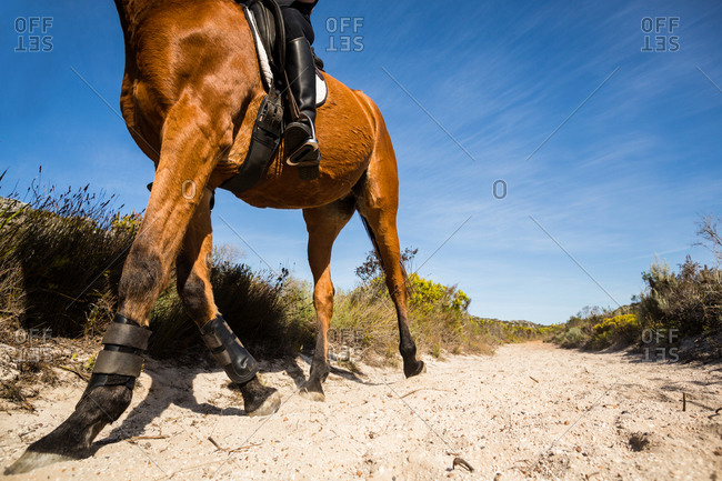Low angle view of a horse with rider on a dusty trail