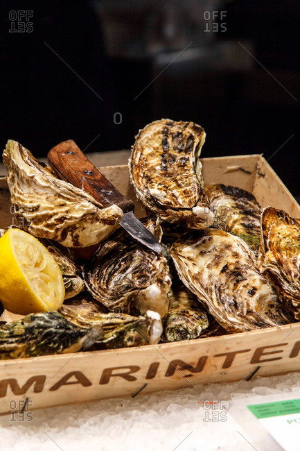 Fresh oysters and an oyster knife