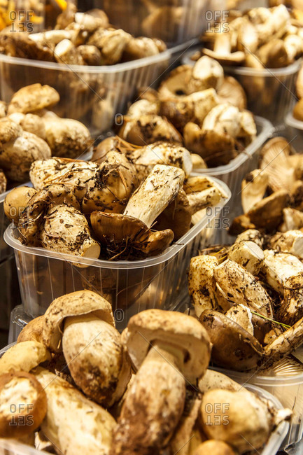 Fresh mushrooms for sale