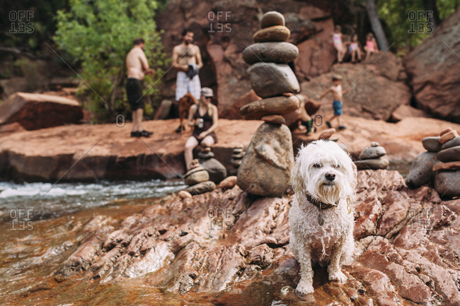 Wet shaggy dog at a stream swimming hole