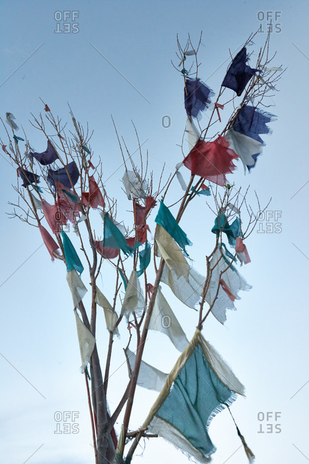 Tibetan prayer flags hanging from tree