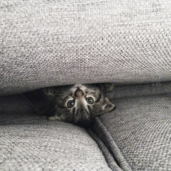 Kitten lying between couch cushions