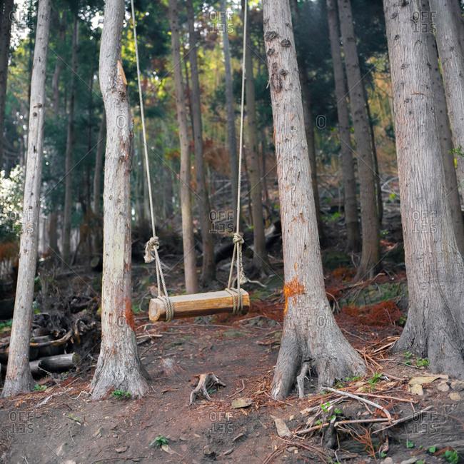 A wood swing in a forest in Hamagurihama, Ishinomaki, Japan